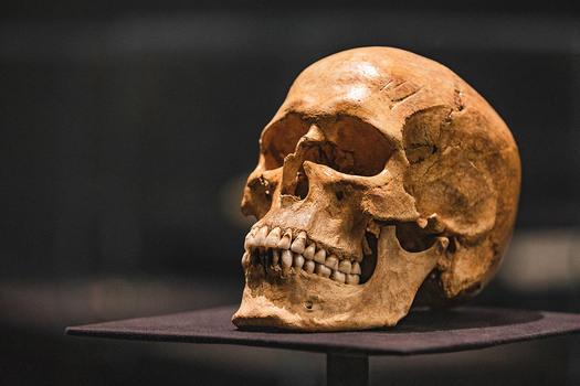 Schedel met gevijlde tanden, 9de - 11de eeuw, gevonden in Gotland, been, bruikleen Gotlands Museum, Visby, Zweden. Foto: Ruben van Vliet